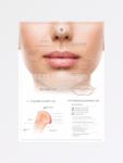 строение губ