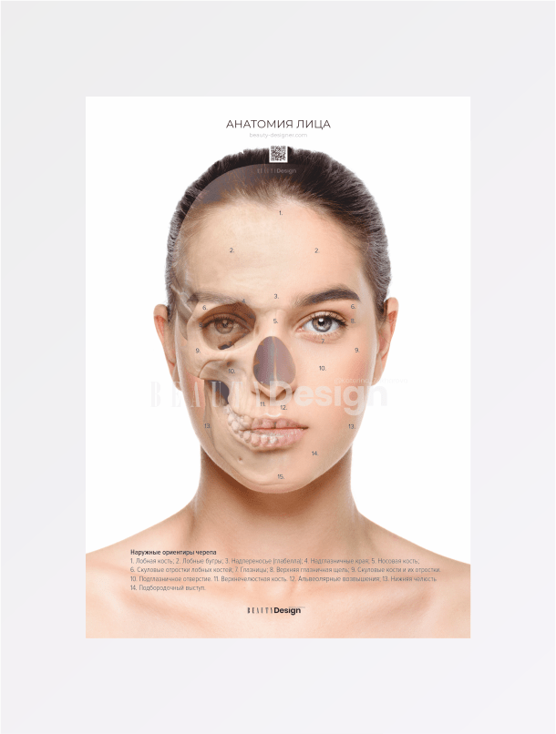 Анатомия лица