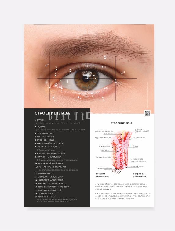 Анатомическое строение глаз А2