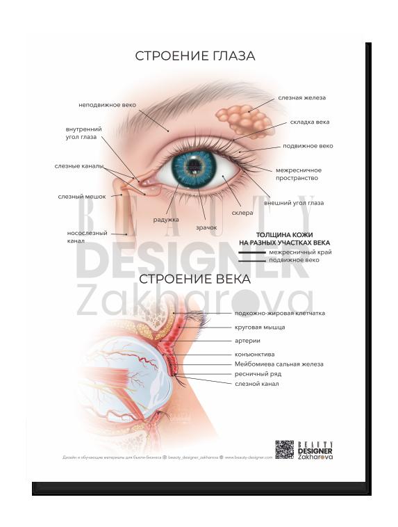 """Плакат """"Строение глаза и века"""""""