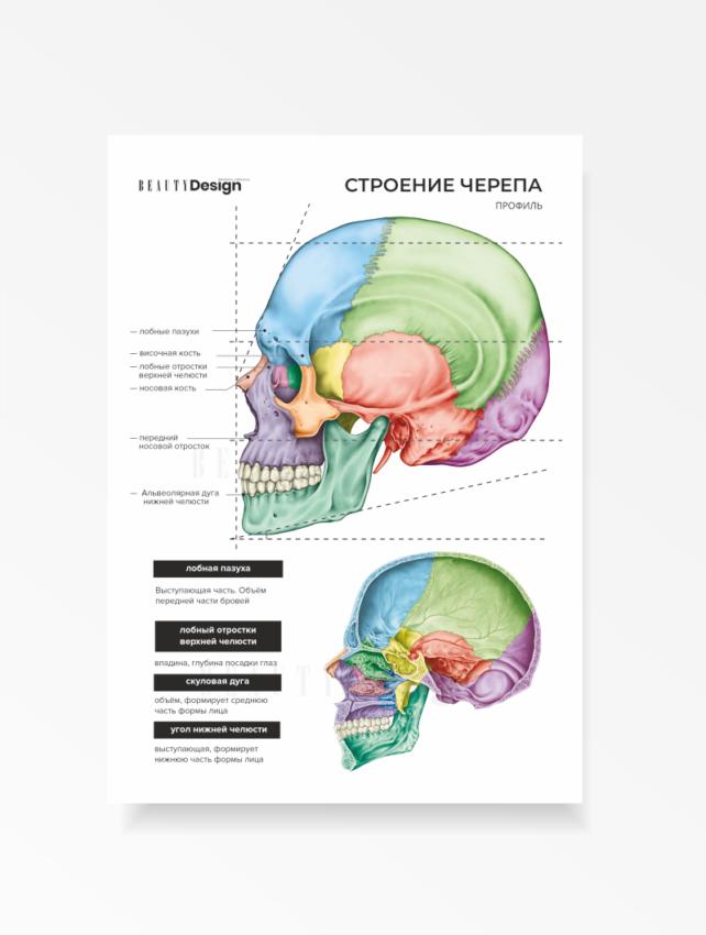 Учебное пособие. Анатомия черепа